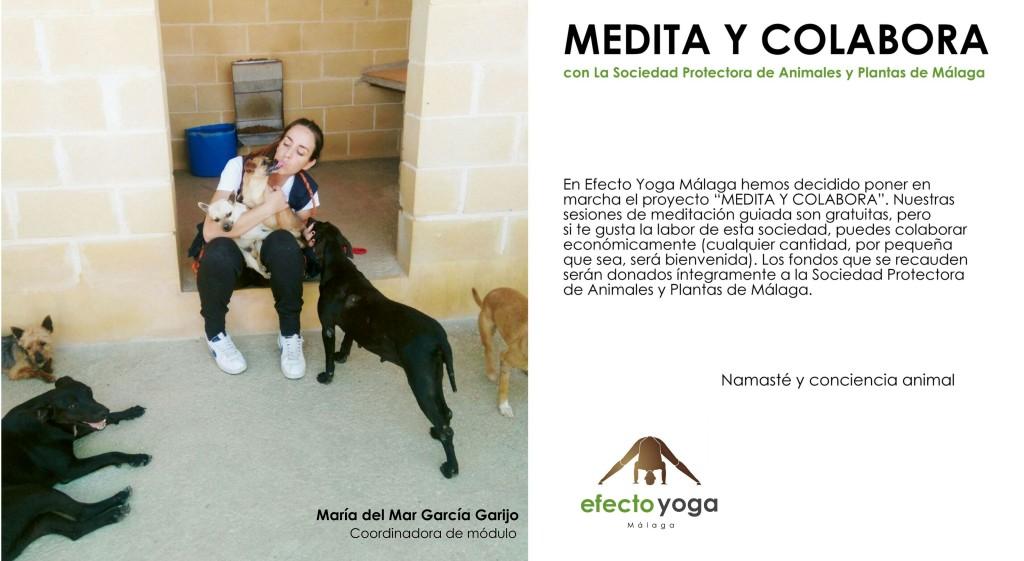 """""""Medita y Colabora"""" - Efecto Yoga Málaga"""